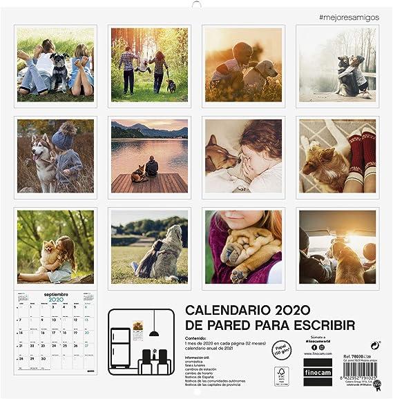 Finocam - Calendario de pared 2020 Imágenes 30x30 Mejores Amigos español: Amazon.es: Oficina y papelería