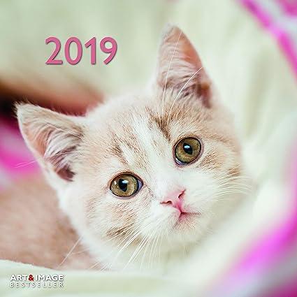 Calendario 2019 gato con Póster - gatos - gato - gato atigrado ...