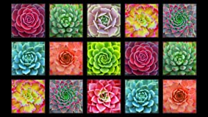 Elizabeth's Studio Succulent Charm Panel from 100% Cotton Quilt Fabric 597 Black