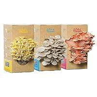 Lot de 3 kits à champignons Prêt à Pousser : Pleurotes gris, jaunes et roses