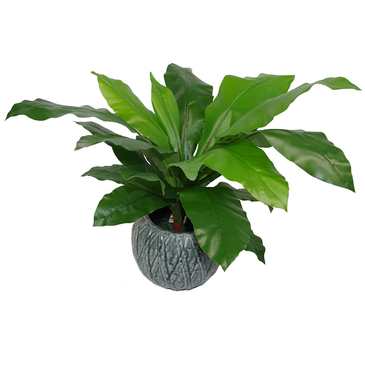 Leaf Artificial Bird's Nest Fern Plant Potted in Black Plastic Pot, 50cm Bushy LeafUK