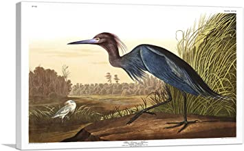 ARTCANVAS Great Blue Heron Canvas Art Print by John James Audubon