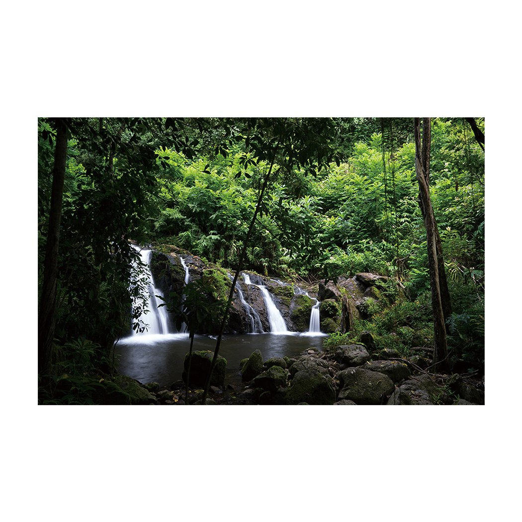 SUN-Shine Aquarium Background Fish Tank Wallpaper Sticker Backdrop, Nature Green Tree, Waterfall and Stream Flowing in the Forest
