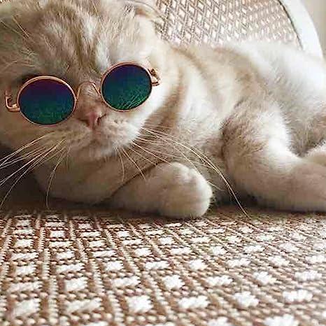 LYXMY - Gafas de Sol para Perros y Gatos (protección UV ...