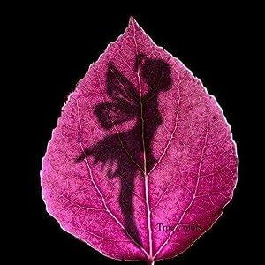 Mariarosaria Guarino