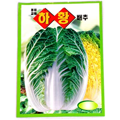 Cabbge Seeds Korean. 2 Pack(4grams-each) : Cabbage Plants : Garden & Outdoor