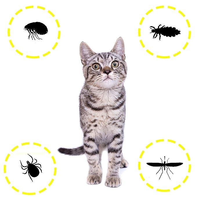 DISANE Pipetas Antiparasitarias para Gatos Naturales | 2 Meses de Protección Antipulgas, Contra Insectos y Parásitos: Pulgas, Garrapatas y Mosquitos | ...