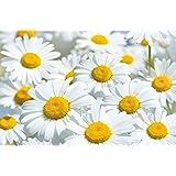 Margherita fiore prato fotomurale decorazione da parete by GREAT ART (210 x 140 cm)
