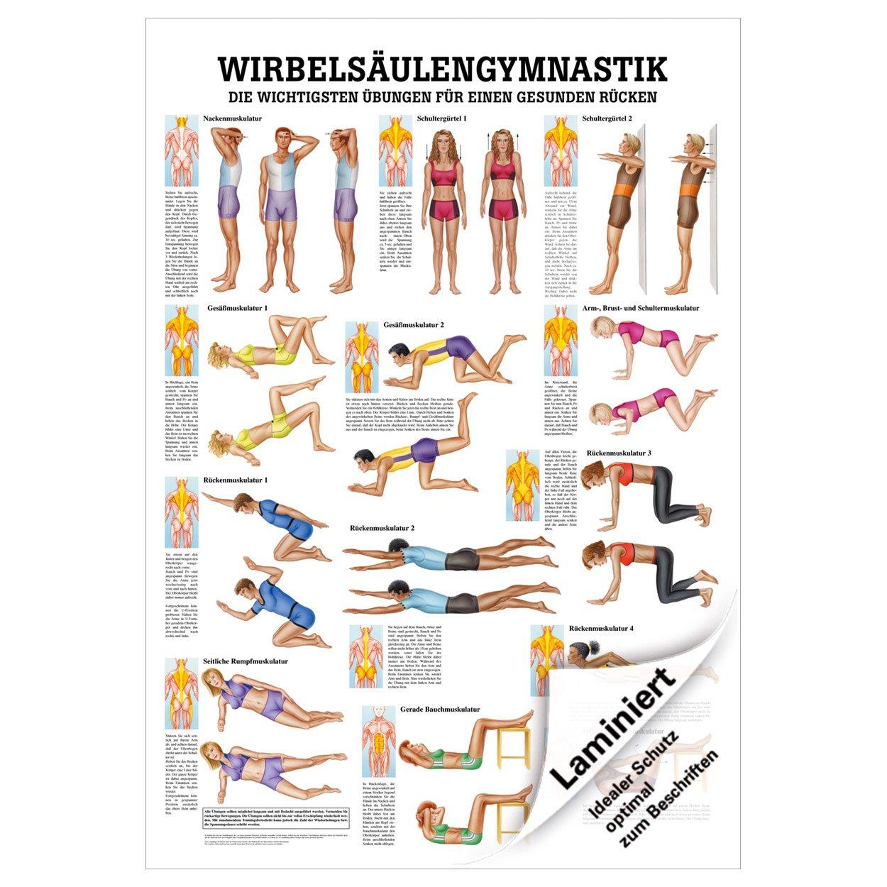 Charmant Liste Der Schultermuskulatur Ideen - Menschliche Anatomie ...