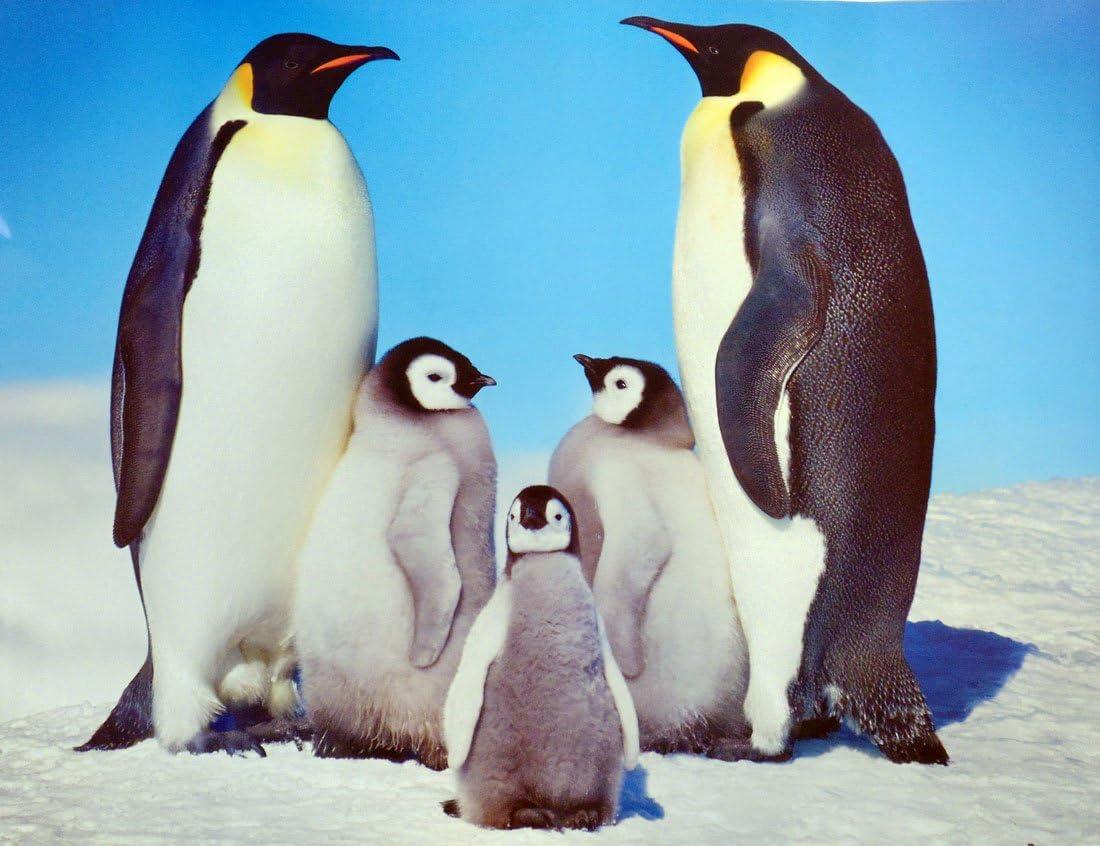 24 x 36) los pingüinos – foto de familia Póster: Amazon.es: Hogar