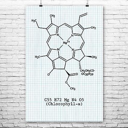 amazon com chlorophyll molecule poster science art print