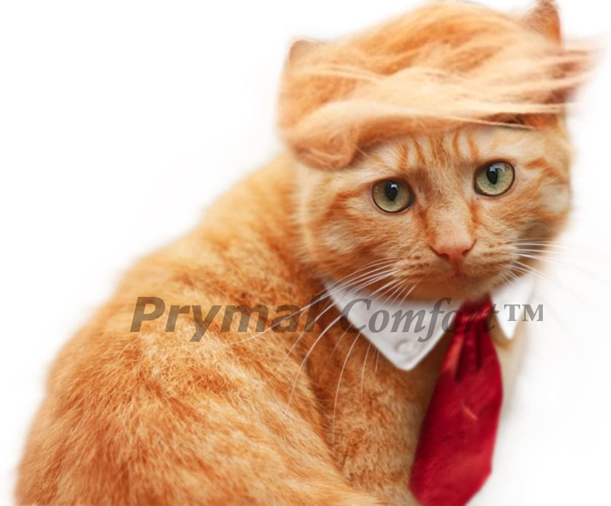 Amazon Com Trump Cat Dog Costume For Halloween Parties And Pictures Kitchen Dining