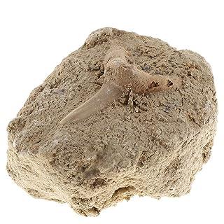 Homyl Giocattoli Collezione Minerali Rocce Esemplari Raccolta Classe Bambini Regale Natale Compleanno