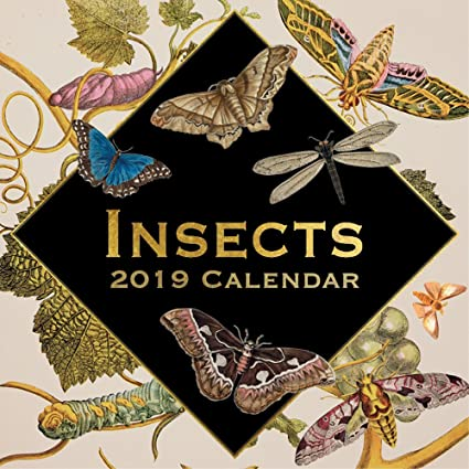 exquisite creatures insect art 2019 wall calendar