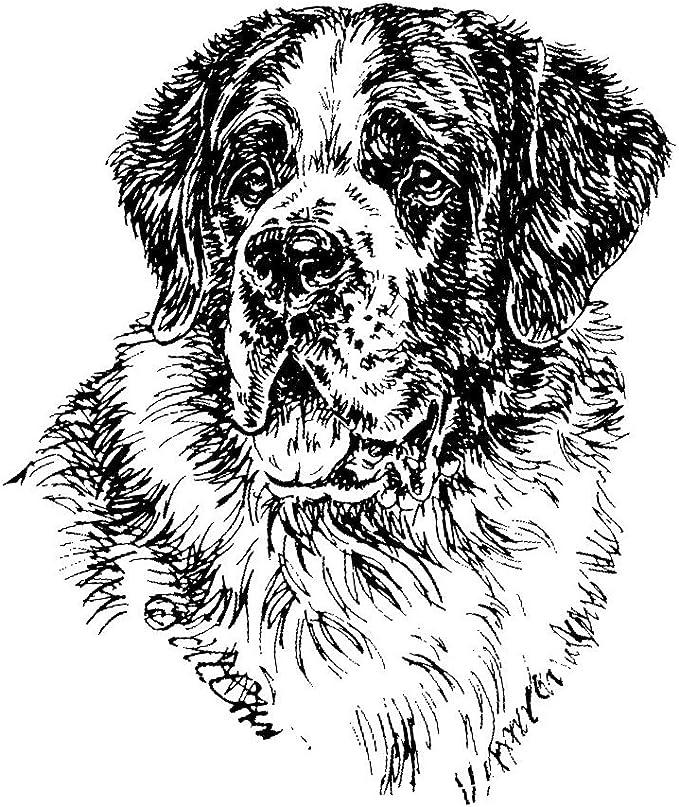Schecker Autoaufkleber Hundeaufkleber Ideal Für Helle Autos Bernhardiner Haustier