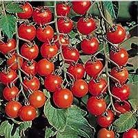 AGROBITS Ver rojo tomate cherry Cherri Organilly Grown