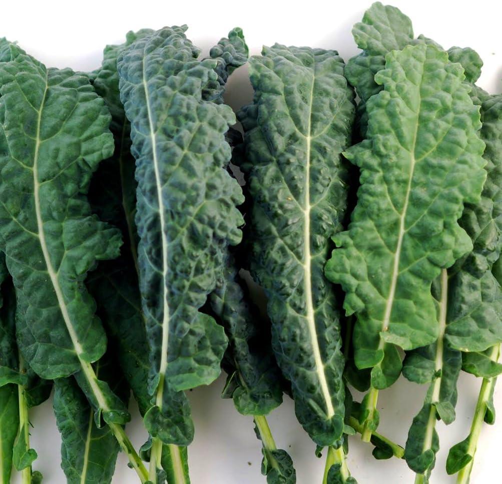Amazon.com: Kale Italian Lacinato Nero Toscana Seeds ▻ Certified Organic  Kale Seeds (100+ Seeds) ◅ by PowerGrow Systems: Toys & Games
