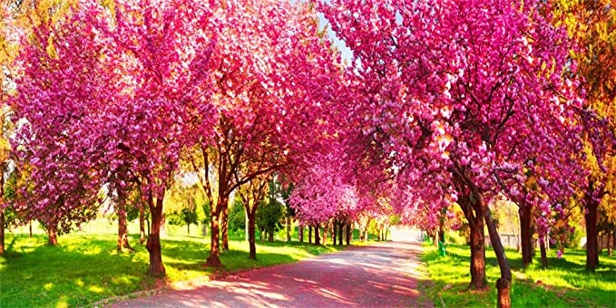 Pink Blossom Road Backdrop 6x9ft Sakura Polyester Photography Background Oriental Cherry Trees Petal Tour Holiday Spring Scenery Wedding Birthday Girls Portrait Shoot Photo Prop Decor Poster