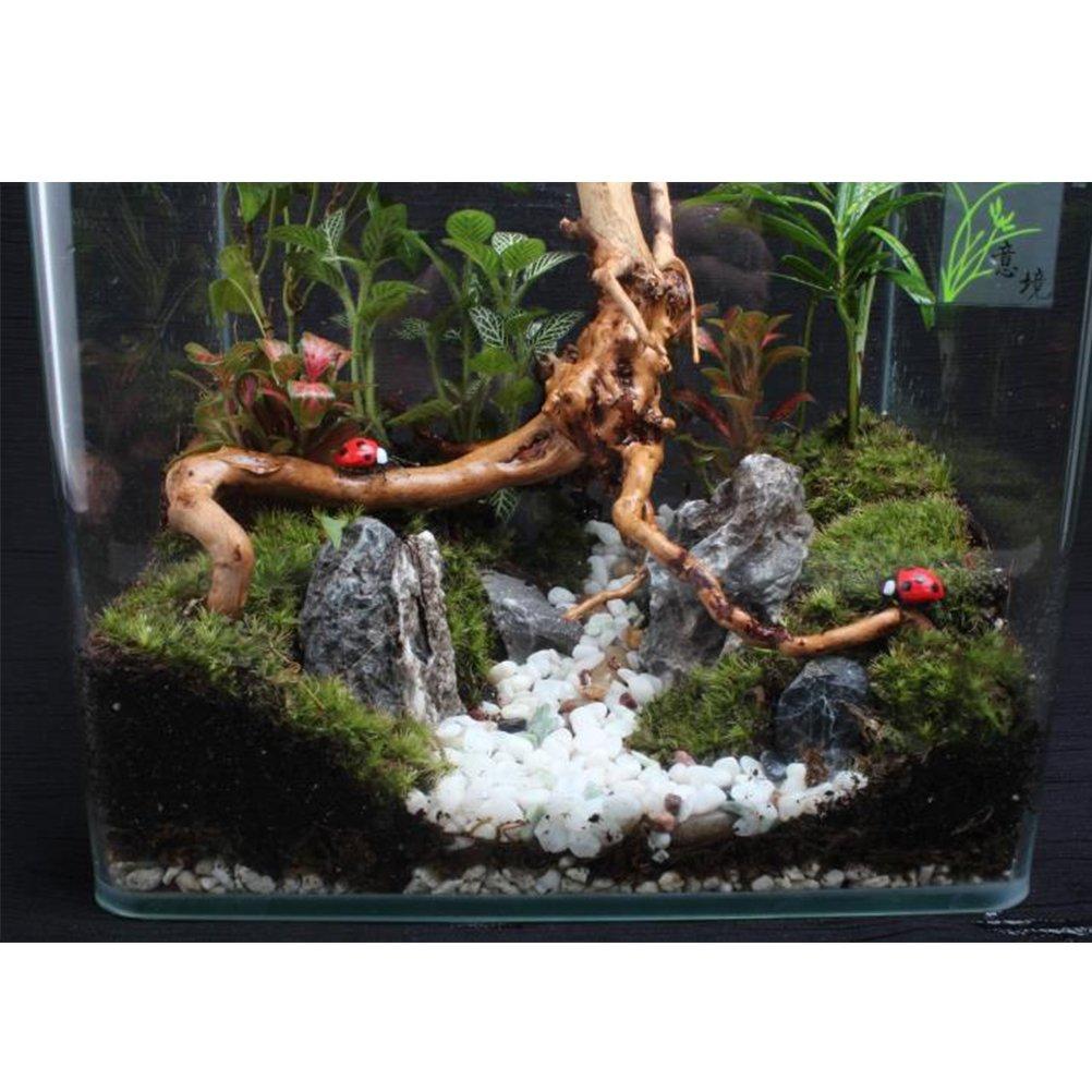 OUNONA Tronco de madera natural tronco de árbol acuario tanque de peces decoración en miniatura paisaje L (entrega al azar): Amazon.es: Hogar