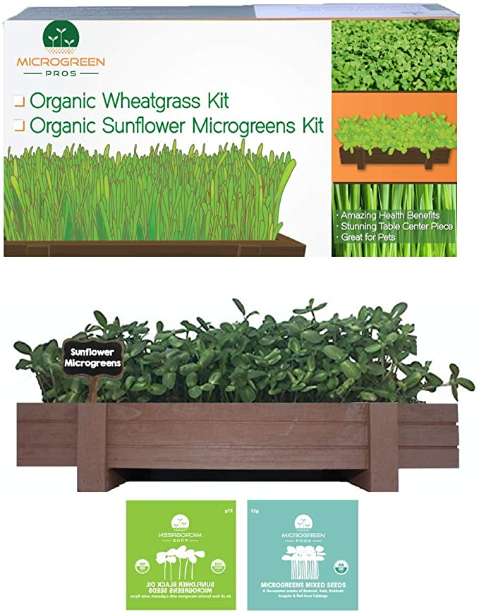 Mix Non GMO Microgreen HEALTHY DUET Harvest in 10 days Seeds from Russia.