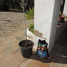 Sustratos Ecológicos Sustrato Humus Lombriz 10l. Batlle + Sustrato ...