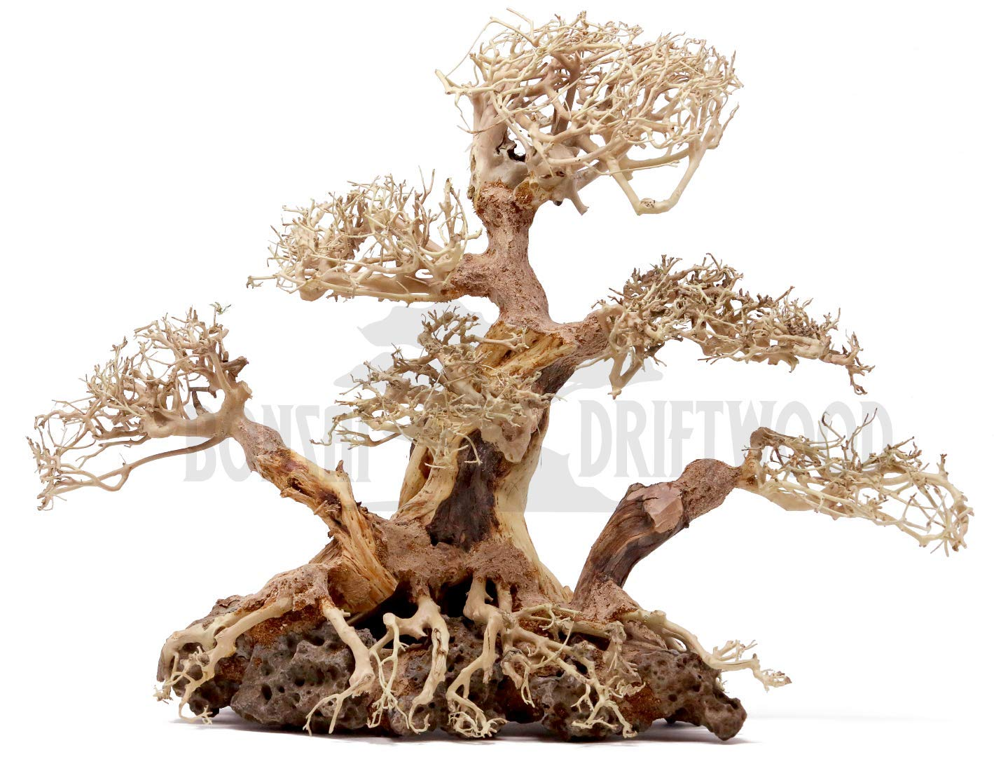 Bonsai Driftwood Aquarium Tree BLS (12 Inch Height x 9 Inch Width x 16 Inch Length) Natural, Handcrafted Fish Tank Decoration | Helps Balance Water pH Levels, Stabilizes Environments | Easy to Install by Bonsai Driftwood