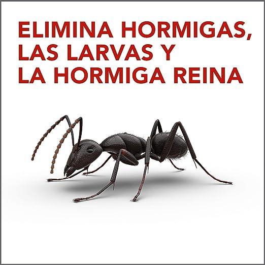 Raid Cebo Antihormigas - Insecticida Cebo Hormigas Interior y ...