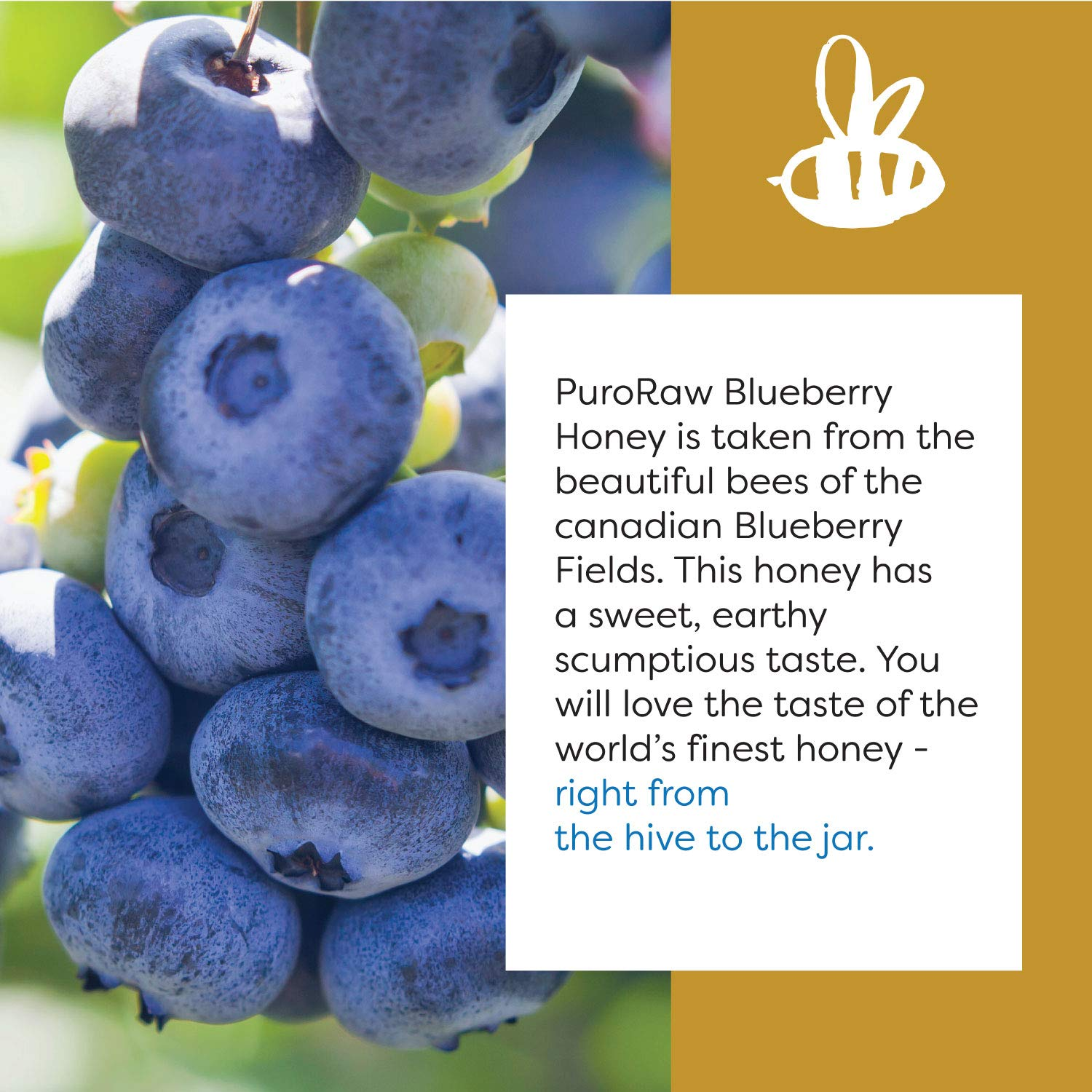 Raw Blueberry Honey, Pure Unfiltered Honey from the Canadian ...
