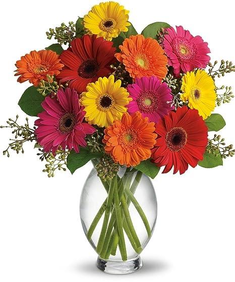 Amazon Allens Flower Market Great Gerbera Daisies Floral