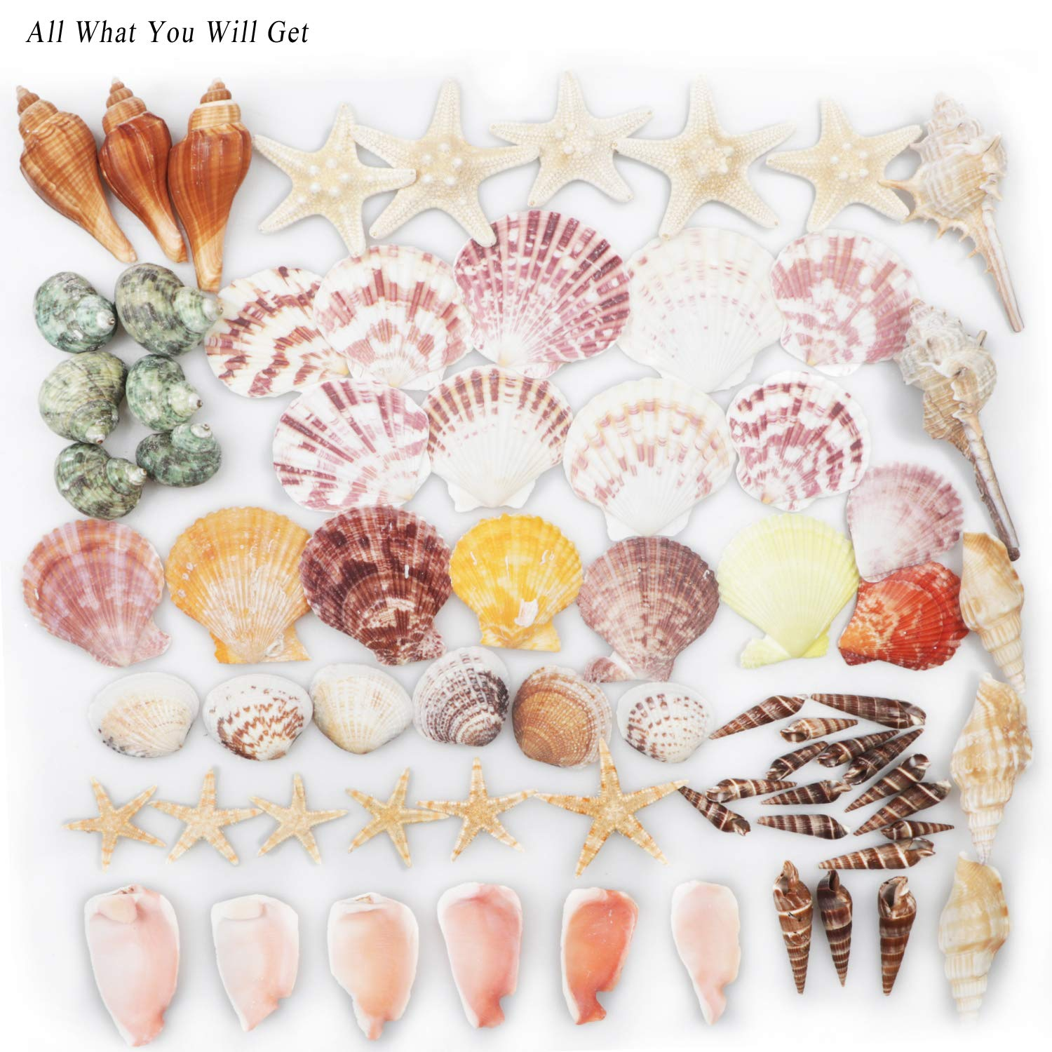 Sea Shells Mixed Beach Seashells 9 Kinds 1.2-3.5 Natural Seashells and 2 Kinds Starfish for Beach Theme Party Wedding Decorations DIY Crafts Home Decorations FishTank Supplies