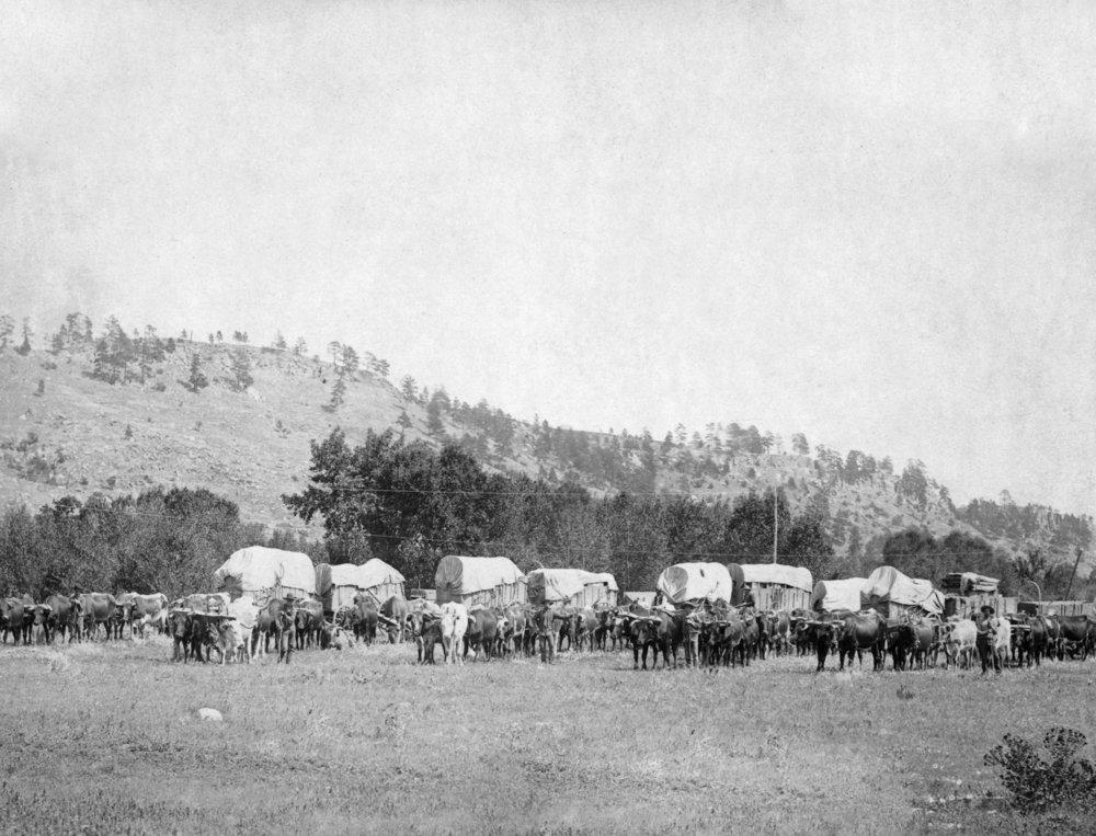 OxチームとWagons in a valleyブラック丘の写真 24 x 36 Giclee Print LANT-5731-24x36 B017ZJ9RE8  24 x 36 Giclee Print