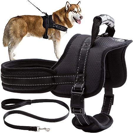 Mihachi Dog Harness with Leash   Amazon