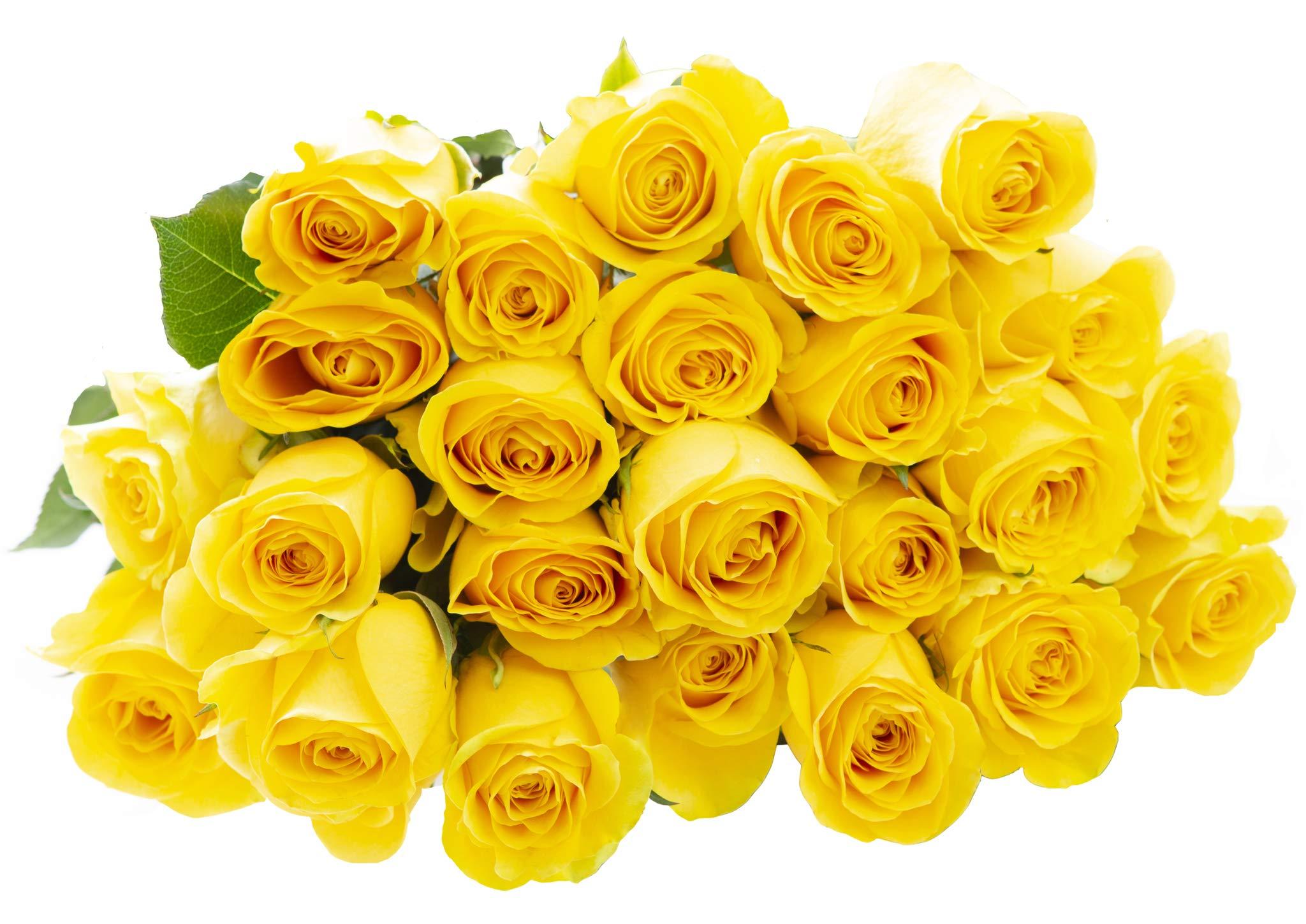 Blooms2Door 25 Yellow Roses (Farm-Fresh, Long Stem - 50cm) - Farm Direct Wholesale Fresh Flowers