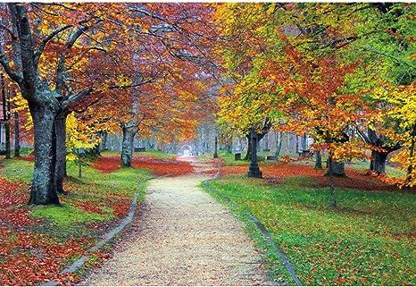 foto de OERJU 3x2m L'automne Toile de Fond Air Frais Belle forêt Parc La ...