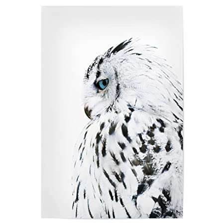 Artboxone Poster Nature White Owl 90x60 Cm Design Art Print By