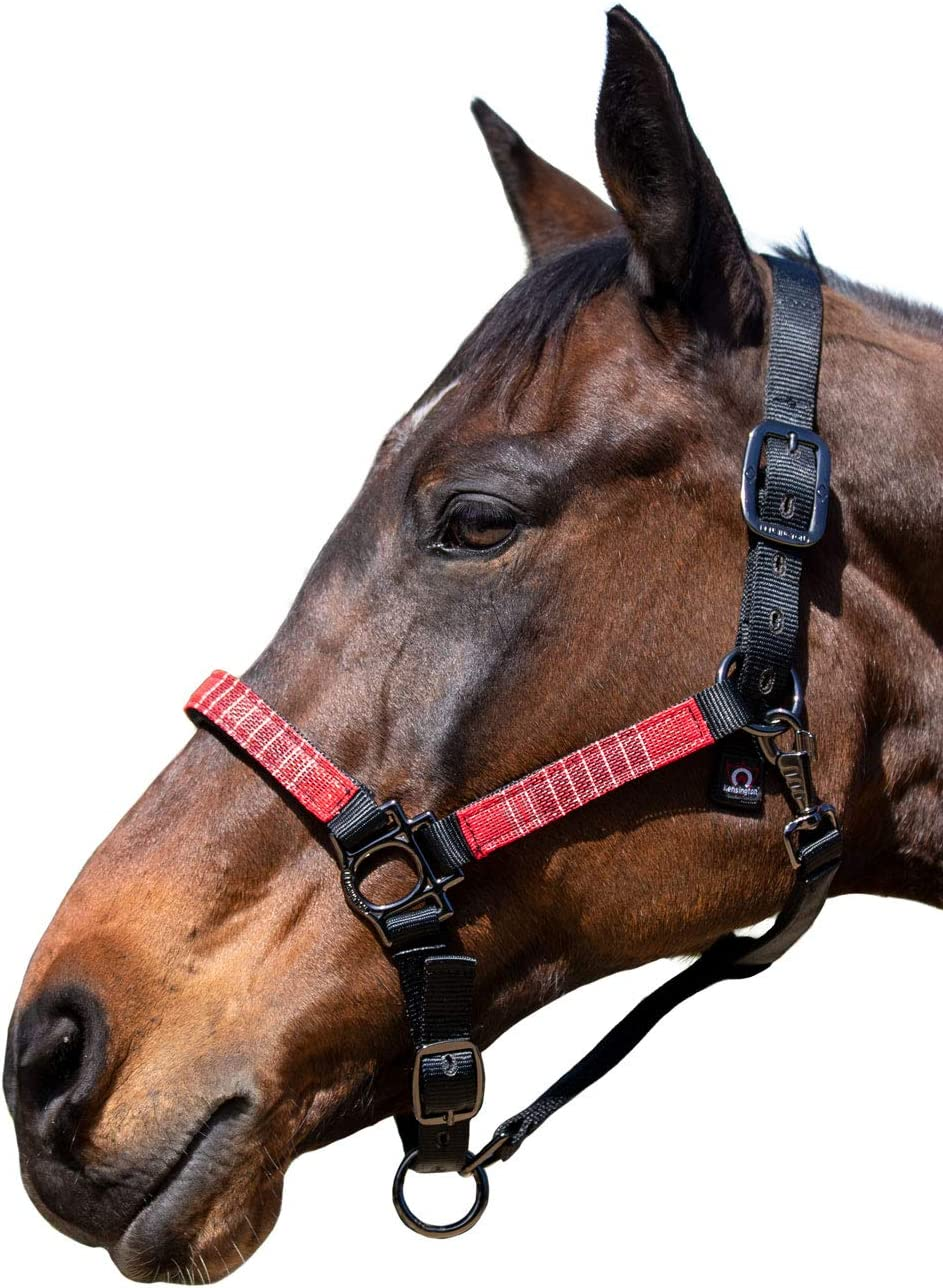 Kensington Premium Halter with Padded 2021 spring and summer new NEW Nose Than Stronger Leath —