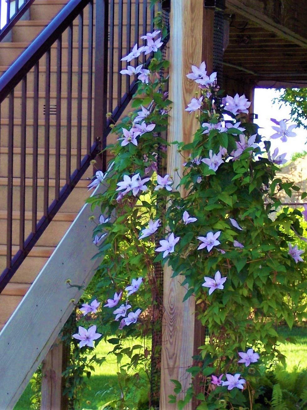 Scroll Trellis Garden Trellis for Narrow Spaces, Deck Posts, Fence Posts, Customizable for Wall and Larger Spaces, Each Plant Support is 108 inches x 4 inches x 2 inches (2 Trellises)