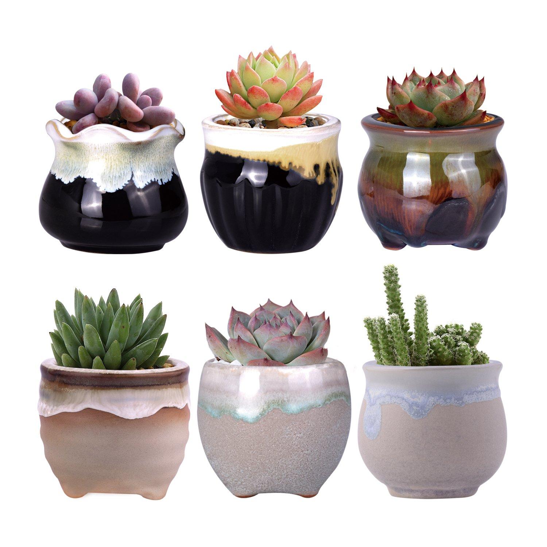 Succulents Pots Bowl with Saucer Decorative Plant Pot with Drainage 6 INCH cnomg Ceramic Succulents Planter