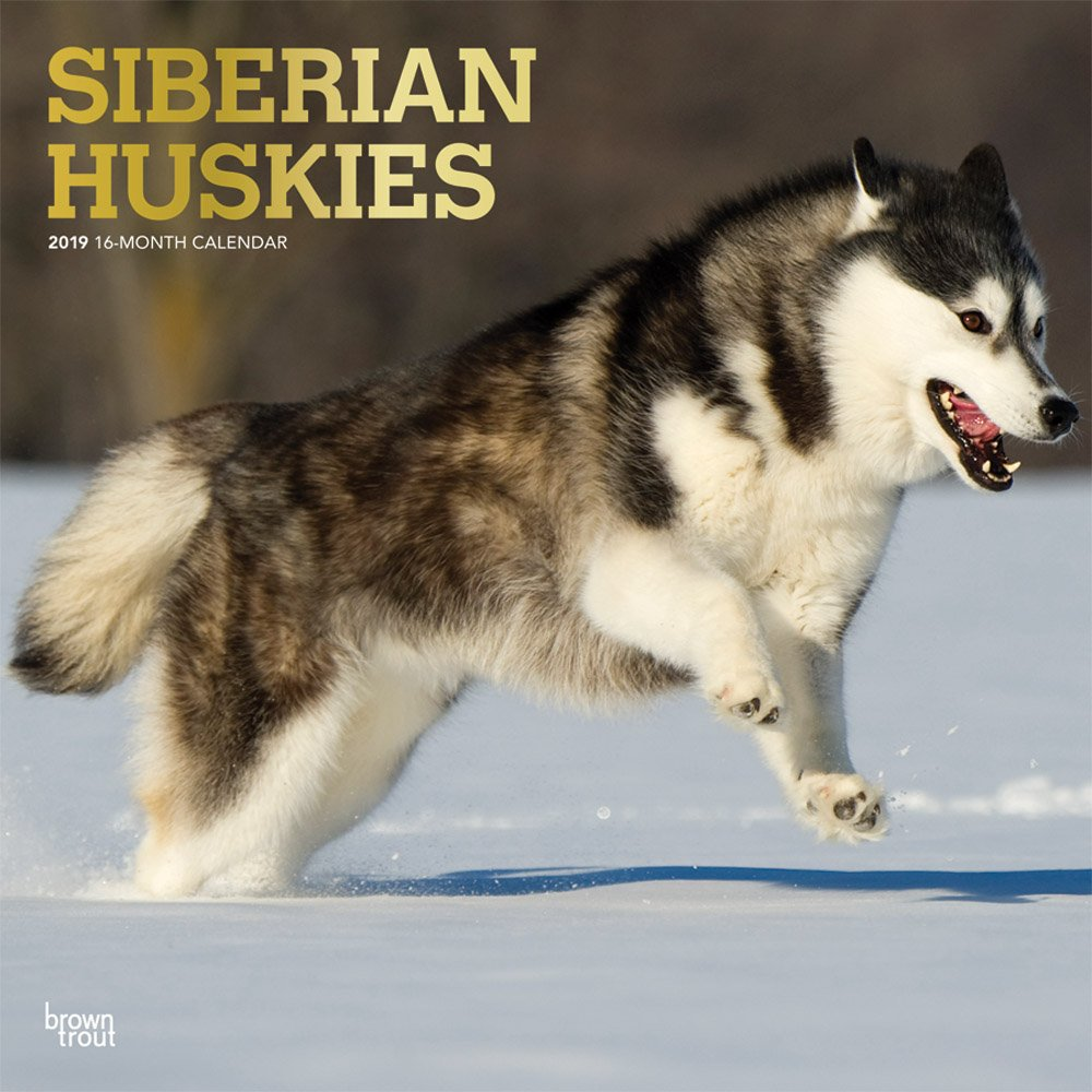 Siberian Huskies 2019 12 x 12 Inch Monthly Square Wall Calendar with Foil Stamped Cover, Animal Dog Breeds Husky (Multilingual Edition) pdf