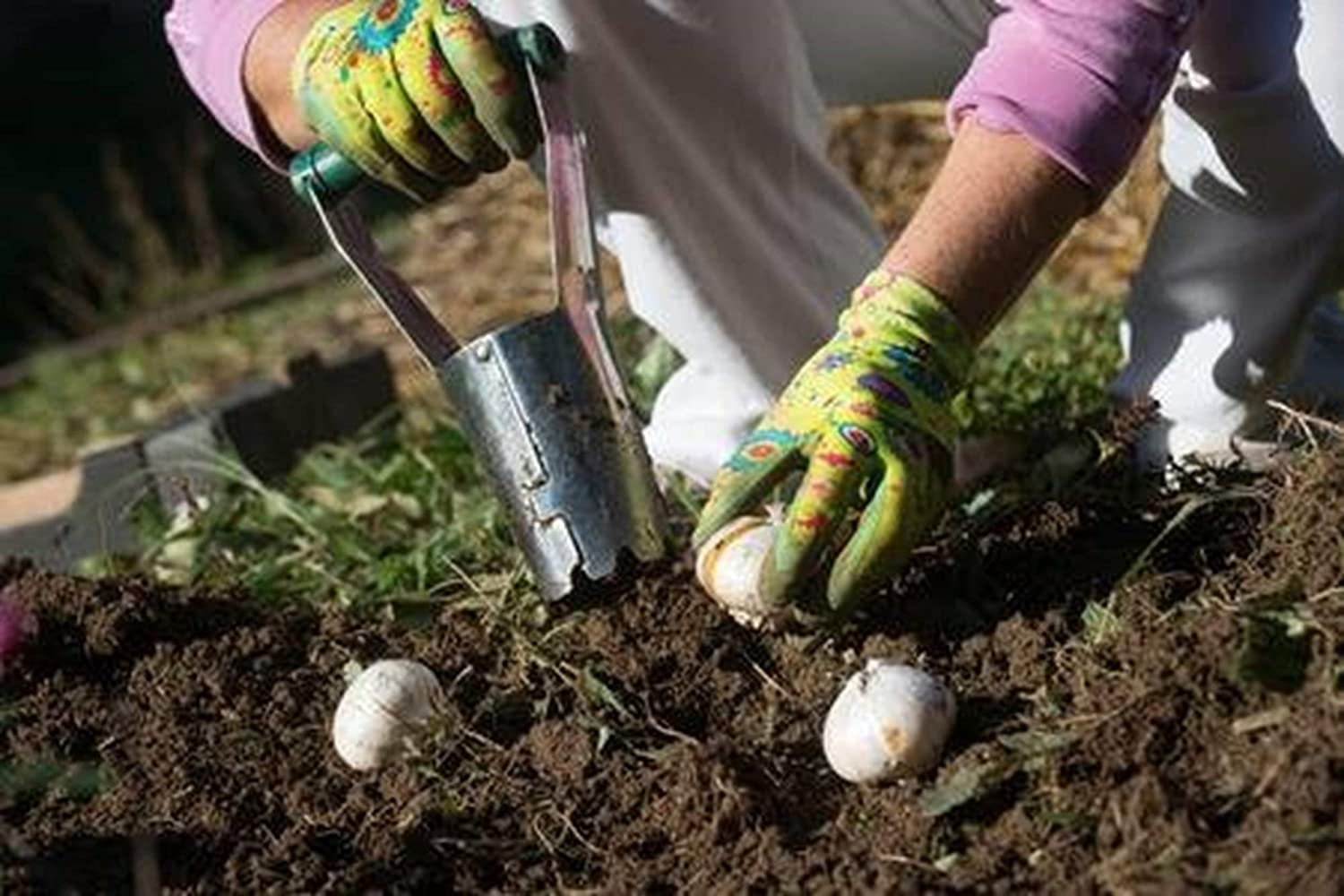 daffodils and other flower bulbs Bulb Planter with Depth Markers Automatic soil release for digging /& refilling hole ideal Garden bulb planting tool for planting tulips