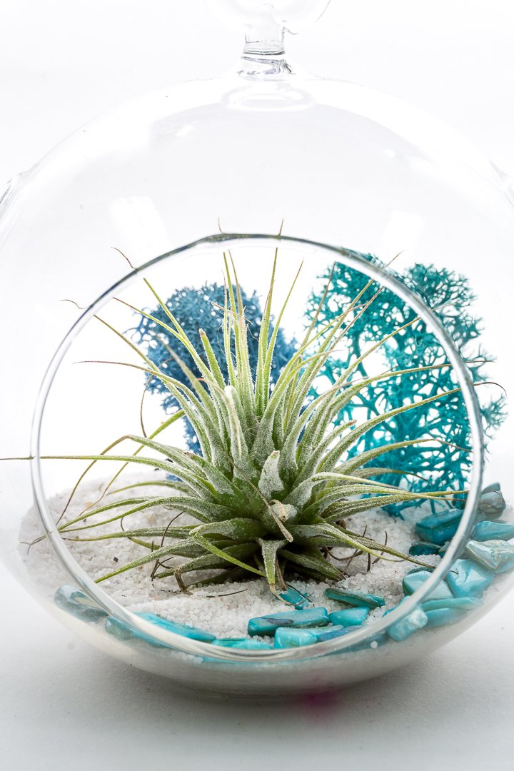 "Air Plant Terrarium Kit | Aqua Crunch | Natural Accents Series | Complete Tillandsia Gift Set | 4"" Glass Globe 