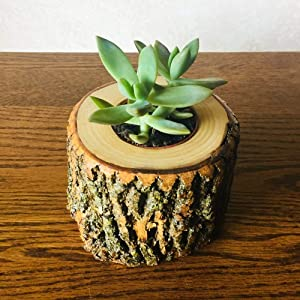 Wood Planter With Live Succulent | Real Succulent Plant With Tree Wood Planter | Succulent Flower Gift Idea | Succulent Tree Wood Holder