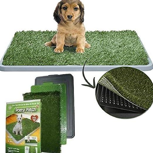 14 opinioni per DOBO® Lettiera MAXI wc per cani e gatti cuccioli di media taglia con erba