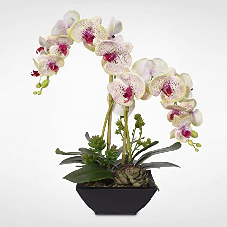 Amazon Com Phalaenopsis Silk Orchids And Succulents Floral Arrangement In Pot Home Kitchen