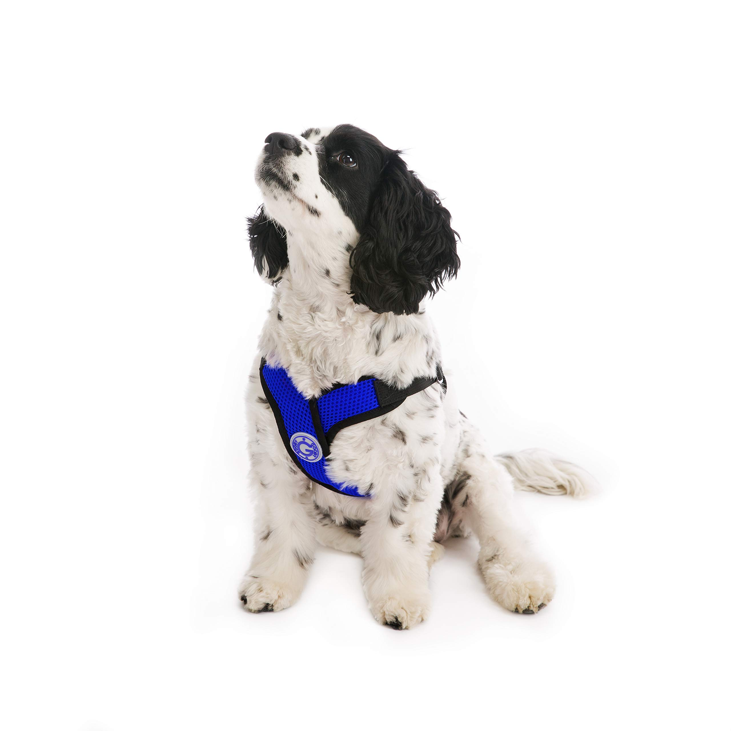 Gooby - Comfort X Step-in Harness, Choke Free Small Dog Harness with Micro Suede Trimming and Patented X Frame, Blue, X-Large