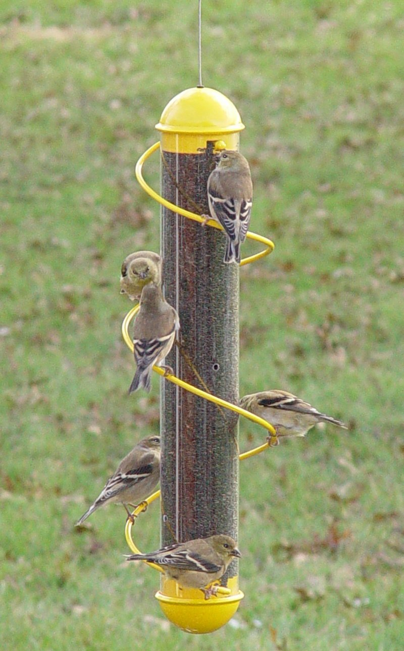 buy copper feeder feeders thistle bird