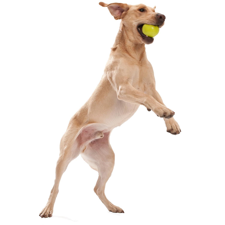 Pet Supplies Pet Chew Toys West Paw Zogoflex Jive Durable