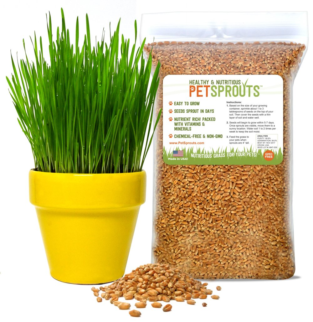 Wheatgrass Seeds - Organic Cat Grass Seeds, Hard Red Wheat, Two Pounds | Non-GMO, Chemical-Free | USA Grown | Bulk 2 lbs