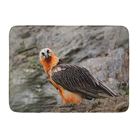Amazoncom Emvency Bath Mat Lammergeier Bearded Vulture Gypaetus