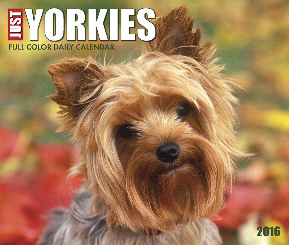 Download 2016 Just Yorkies Box Calendar PDF